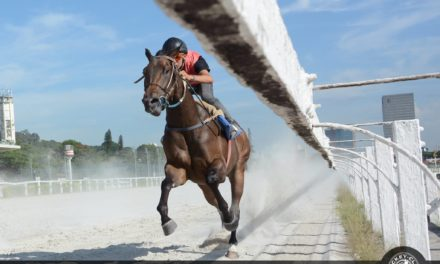 Sábado (25) tem corridas de cavalo no Jockey Club de São Paulo!
