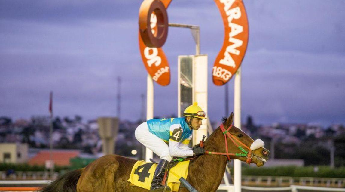 Como apostar e até ganhar dinheiro com corrida de cavalos