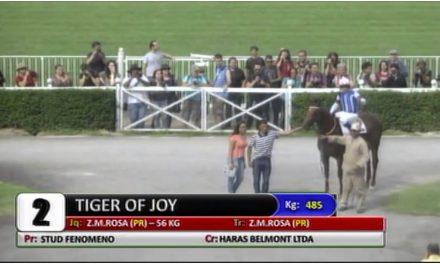 Tiger Of Joy vence em Cidade Jardim
