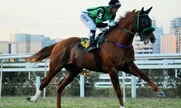 Morre no Paraná o múltiplo ganhador clássico Hotaru